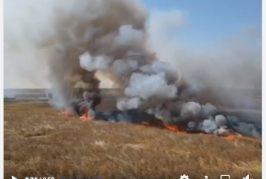 العدو الايراني يحرق المحاصيل الزراعية للمزارعين الاحوازيين